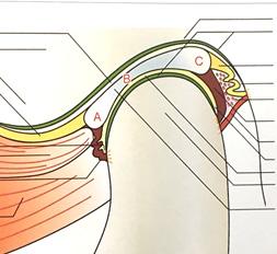顎関節とマウスピース治療